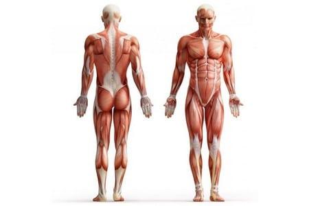 Мышцы мужчины