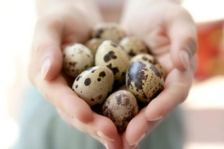 Перепелиные яйца в руках